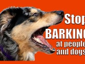 How-To-Train-a-Dog-Not-To-Bark